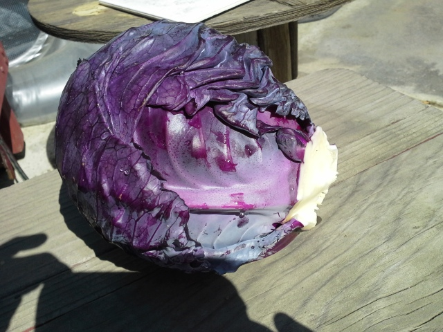 Mammoth Red Rock Cabbage-2015-1
